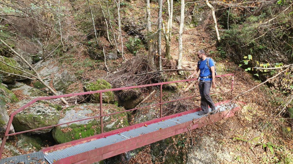 Herbstlicher Wald und Brücke